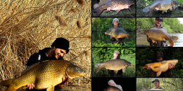 collage_der_successful_baits_teamfaenge.
